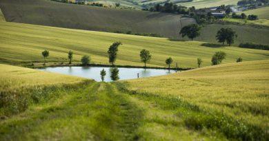 Россельхознадзор: применяет риск-ориентированный подход в отношении земель сельскохозяйственного назначения